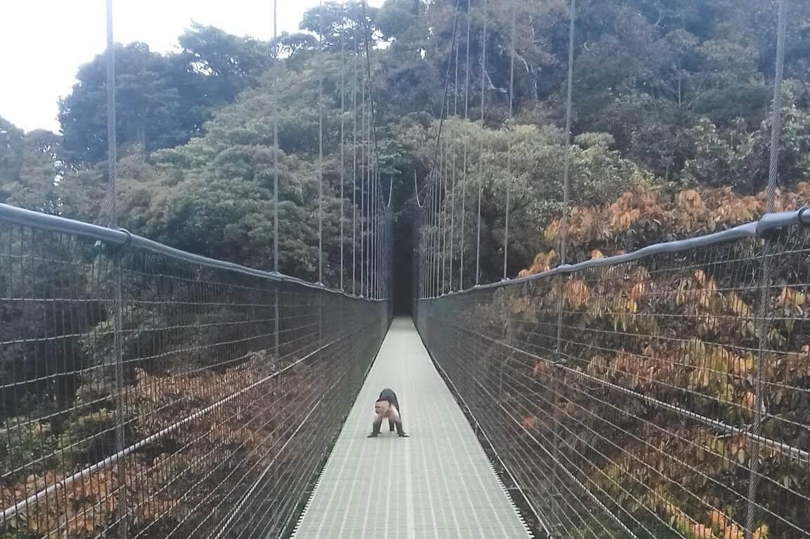 Reserva Florestal de Monteverde