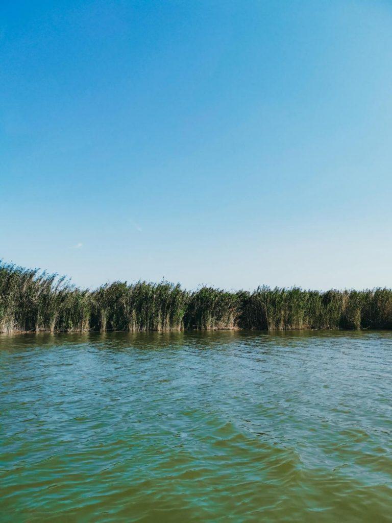 Plantações de arroz no Parque Natural de l'Albufera de Valência © lavidaesmara