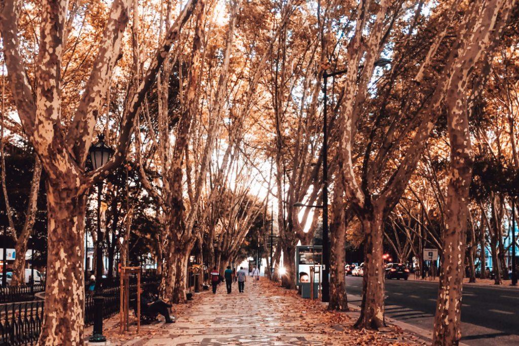 Avenida da Liberdade, em Lisboa durante o outono © lavidaesmara