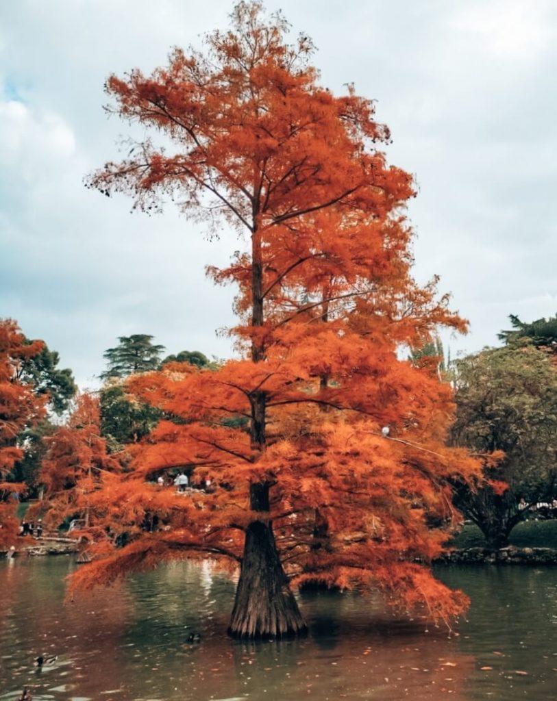 O outono em Madrid no Parque del Retiro © lavidaesmara