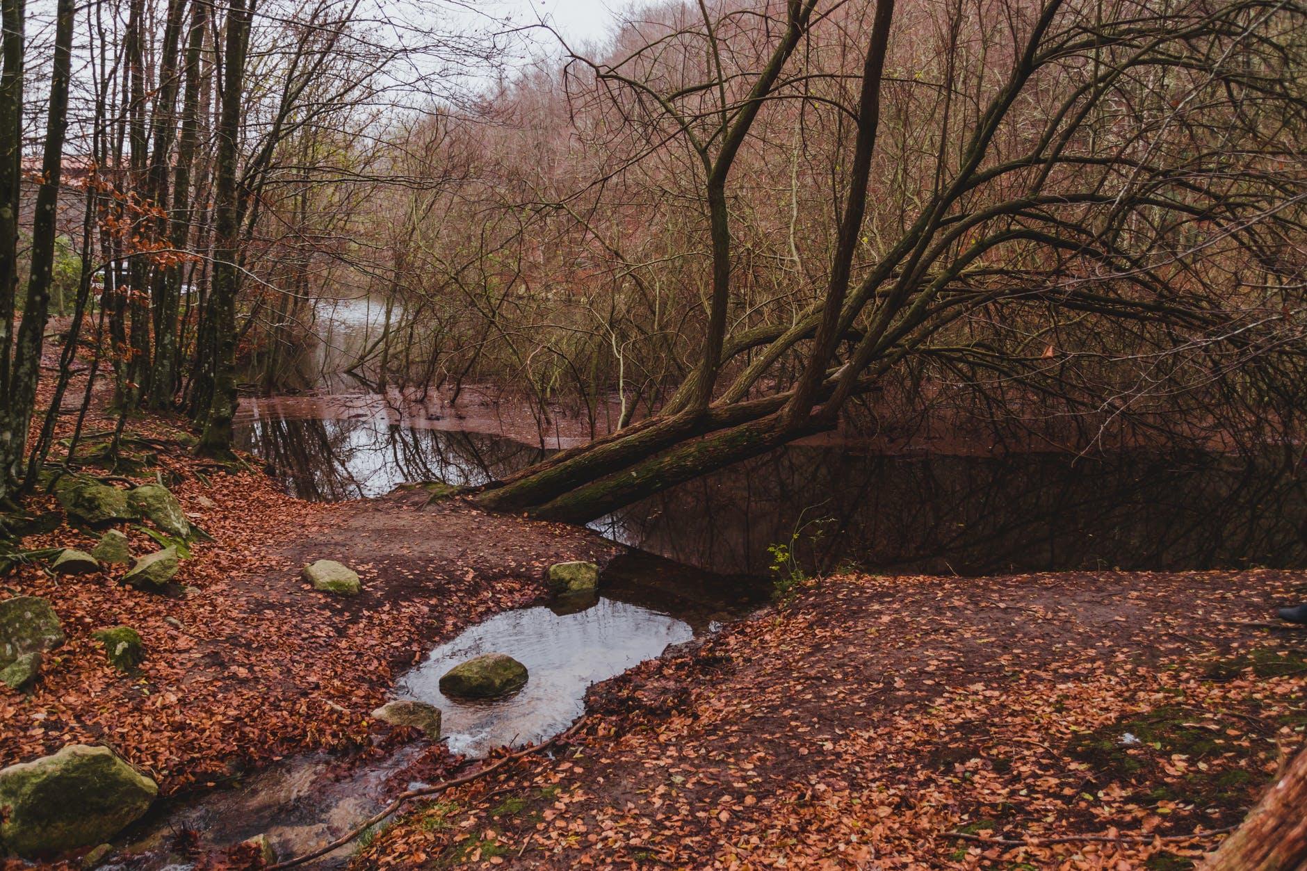 Filmes sobre o outono © Pexels