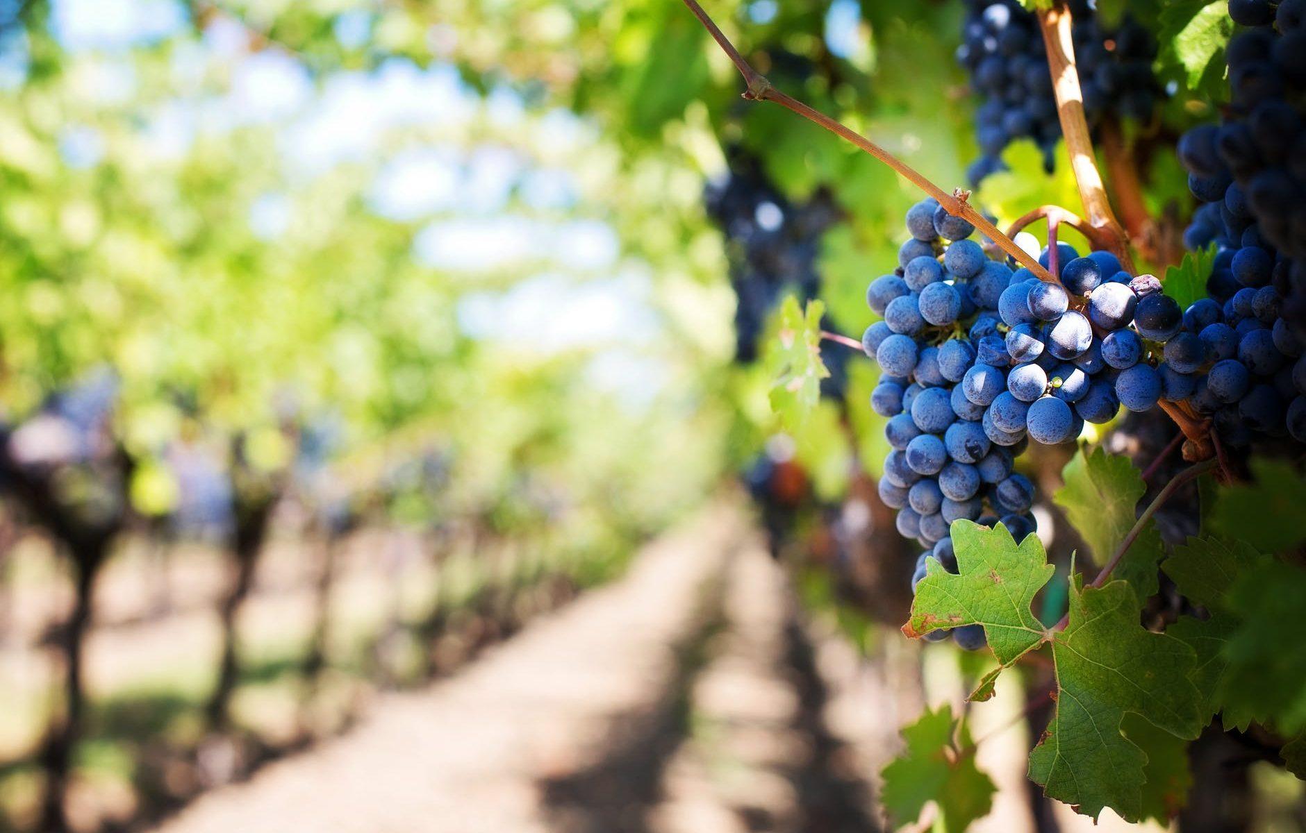 Filmes sobre vinhos © Pexels