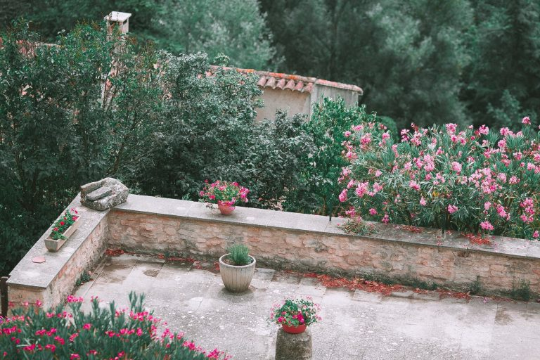 Como cuidar do jardim antes de viajar © Pexels