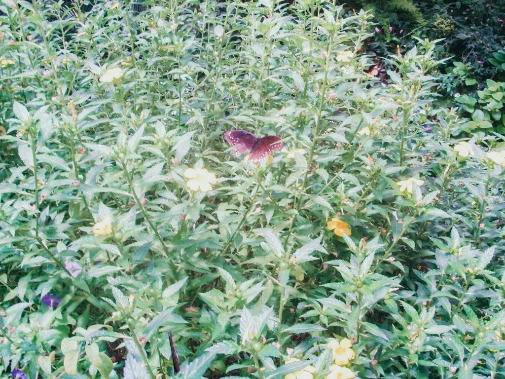 Jardim de borboletas © lavidaesmara