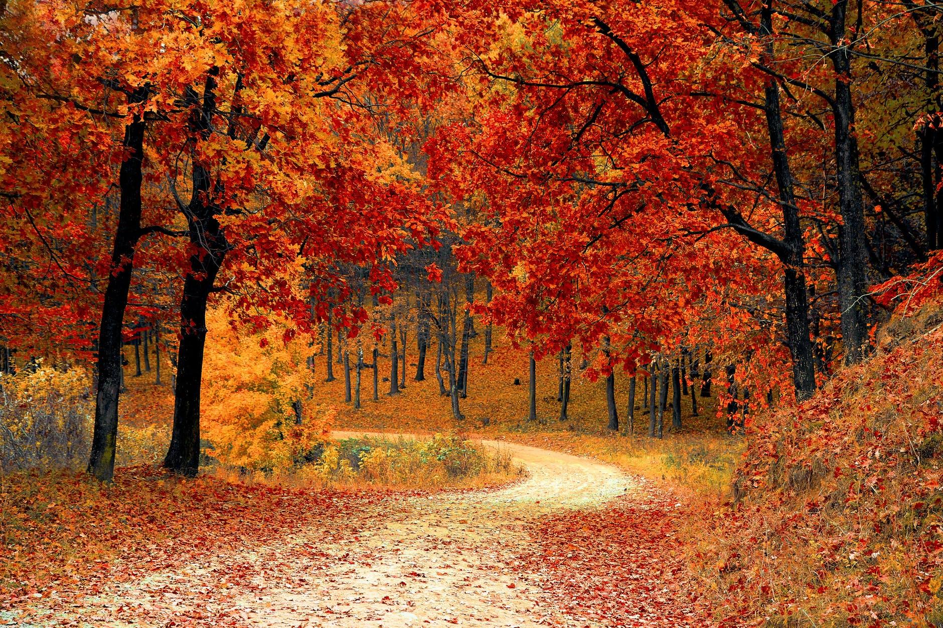 coisas para fazer durante o outono